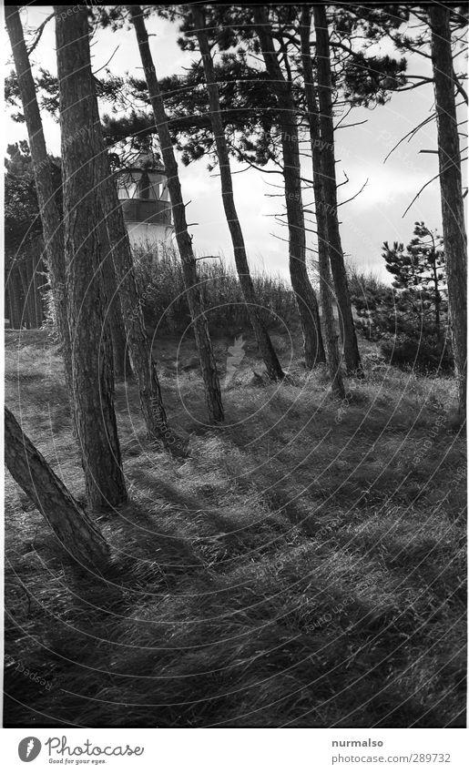 1224 zum 24.12.12 Natur Ferien & Urlaub & Reisen Landschaft Wald Küste Stimmung außergewöhnlich authentisch Tourismus Insel ästhetisch genießen Leuchtturm Süden