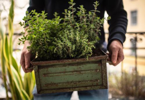Urban Gardening   Kräuter einpflanzen Lebensmittel Bioprodukte Vegetarische Ernährung Lifestyle Stil Gesundheit Zufriedenheit Freizeit & Hobby Häusliches Leben