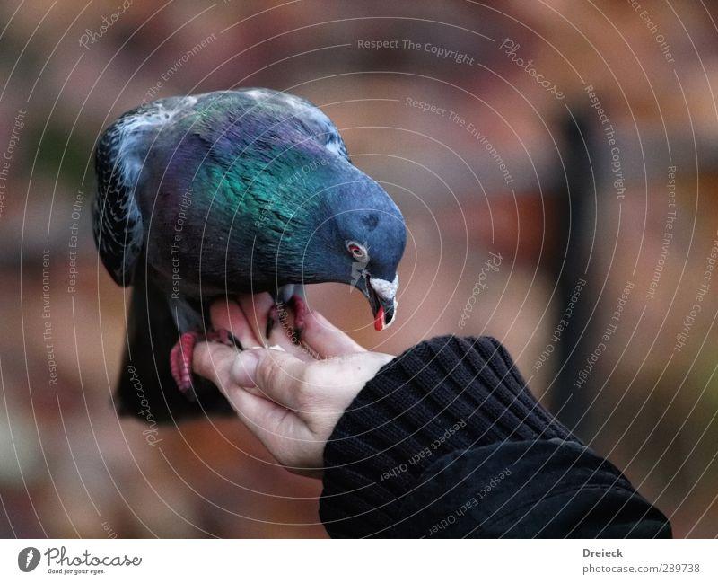 Qualitaetskontrolle Tier Herbst Park Wildtier Vogel Taube Tiergesicht Flügel Krallen 1 Essen Fressen füttern Blick frei lecker Neugier Stadt Vertrauen Tierliebe
