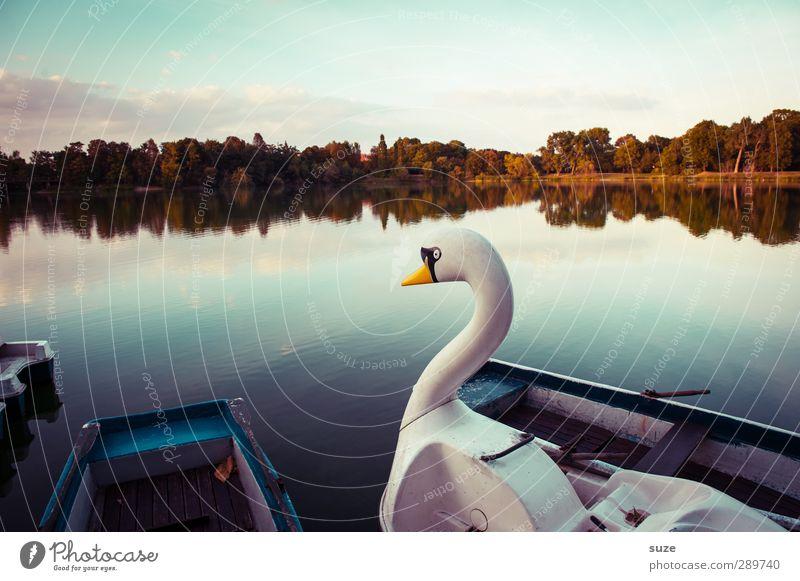 und dann gibt's wieder Diskussionen   das Rentier is'n Schwan Natur Wasser schön Einsamkeit ruhig Umwelt lustig See Horizont Wasserfahrzeug außergewöhnlich Freizeit & Hobby elegant Schönes Wetter Lifestyle Romantik