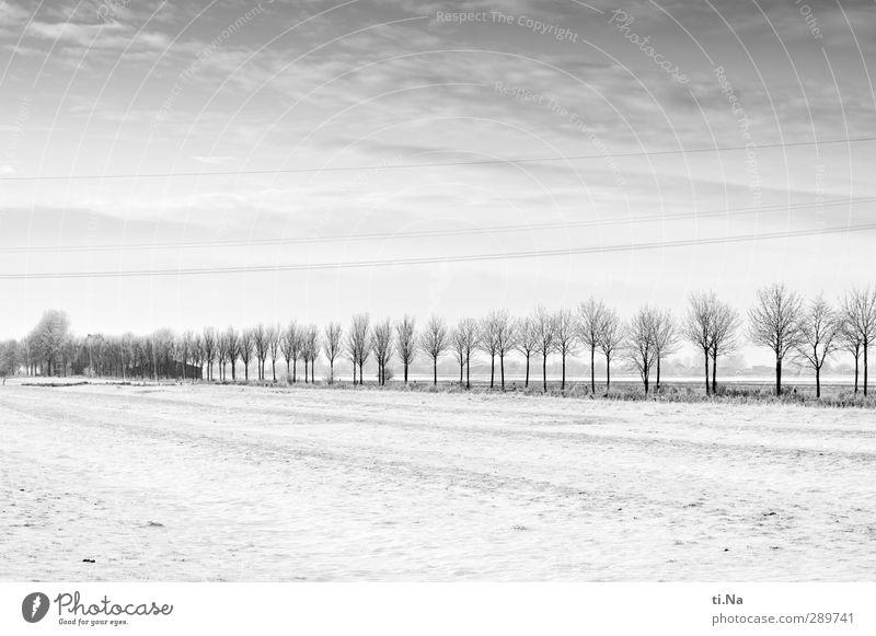 Glædelig Jul! Landschaft Winter Eis Frost Schnee Baum frieren kalt grau schwarz silber weiß Schwarzweißfoto Außenaufnahme Textfreiraum oben Textfreiraum unten