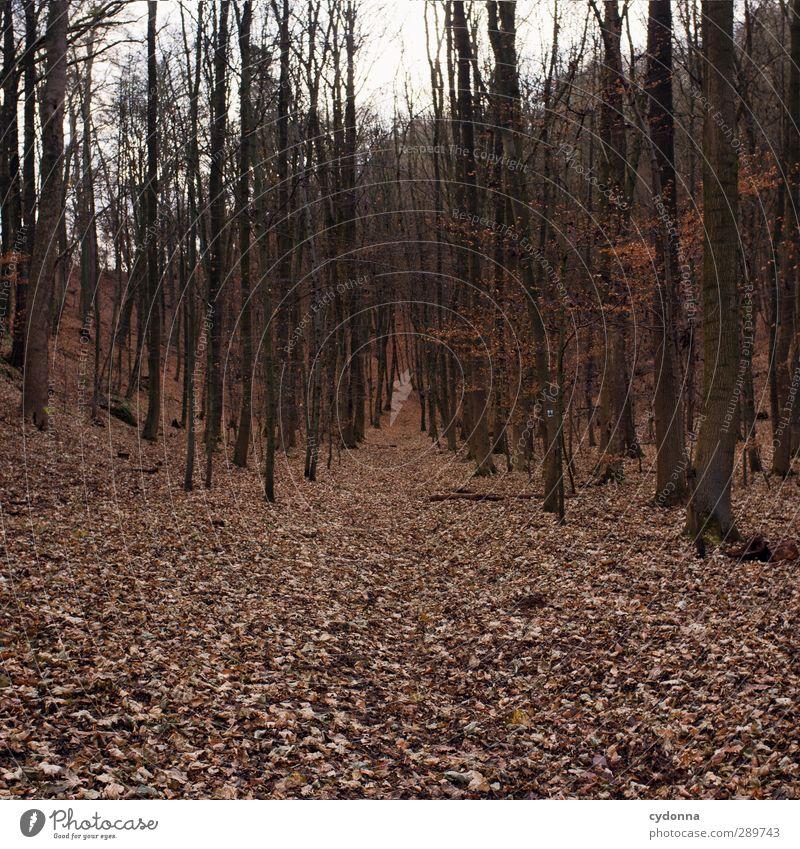Waldweg harmonisch Erholung ruhig Ausflug Abenteuer Ferne wandern Umwelt Natur Landschaft Herbst Baum Einsamkeit Ende Erwartung Freiheit bedrohlich kalt Leben