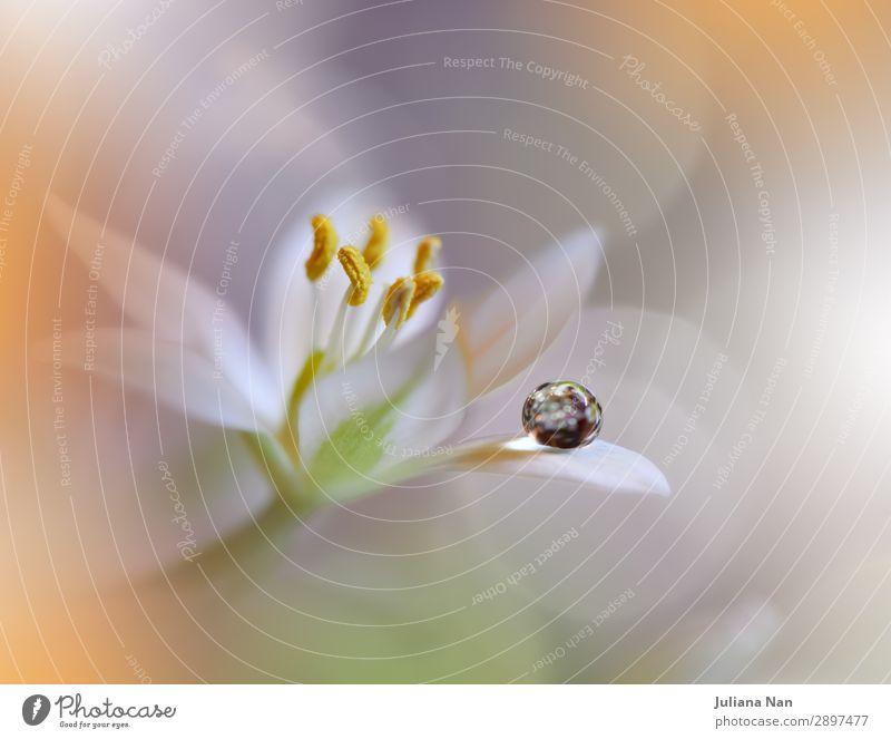 Natur Pflanze Wasser Lifestyle gelb Umwelt Liebe Feste & Feiern Stil Kunst orange Design frisch träumen elegant ästhetisch