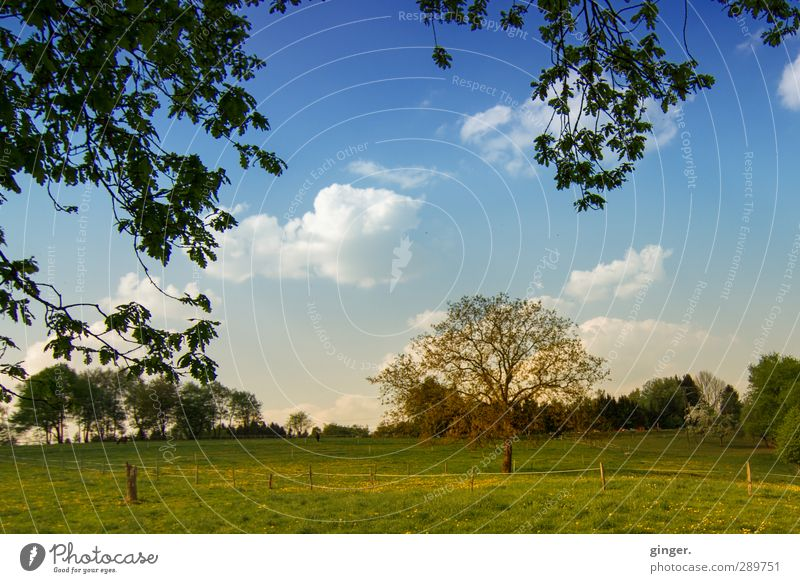 If we just keep on trying, we could be much more. Umwelt Natur Landschaft Pflanze Himmel Wolken Sommer Schönes Wetter Baum Gras Sträucher Feld Wachstum