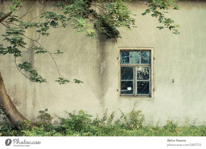 Nur ein kleines Stück Natur grün Baum Fenster gelb Wand Wiese Gras braun Fassade Häusliches Leben Verbundenheit