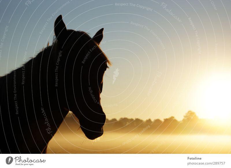 Und dann gibts wieder Diskussionen | Pony rechts oder links Himmel Natur Pflanze Baum Sonne Tier Landschaft Umwelt Wiese Herbst hell natürlich Nebel Schönes Wetter Pferd Fell