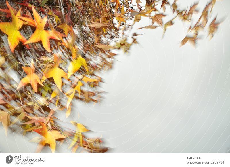 frohe weihnachten Natur Luft Himmel Herbst Klima Wetter Baum frisch schön mehrfarbig gelb Umwelt Blätter Blatt rotieren Politische Bewegungen Außenaufnahme oben