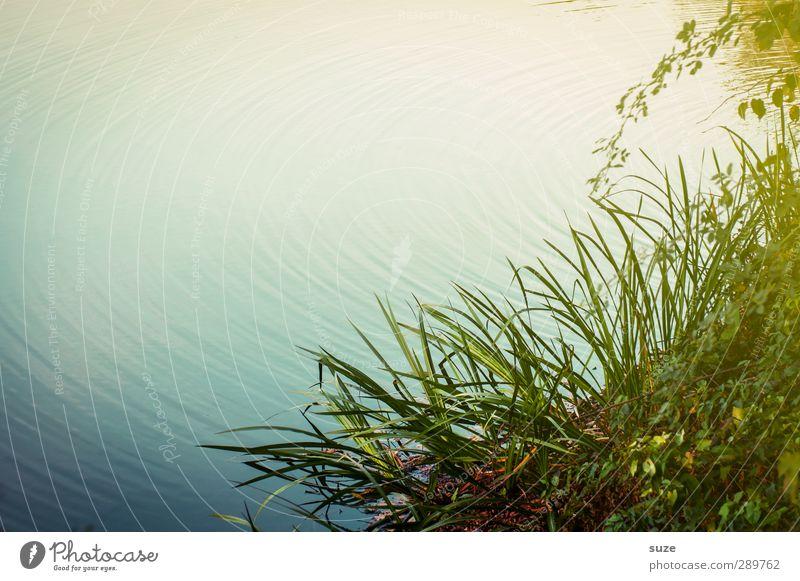 und dann gibt's wieder Diskussionen | Wer warf den ersten Stein? Natur grün Wasser Sommer Einsamkeit Erholung Landschaft ruhig Umwelt Wiese Gras natürlich See