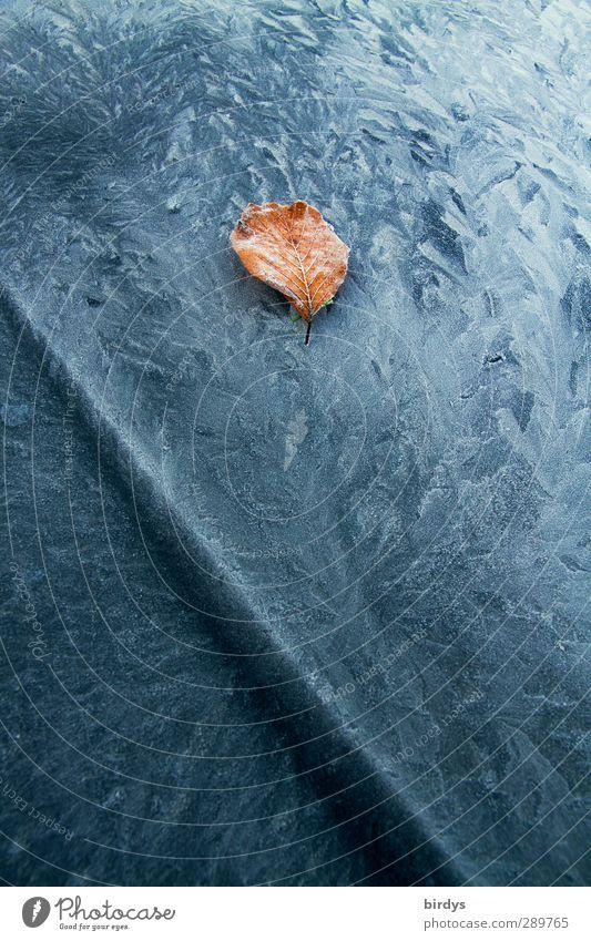 frozen Winter Eis Frost Blatt Motorhaube Eisblumen Muster frieren ästhetisch kalt schön bizarr Klima Wandel & Veränderung Kontrast Linie Herbstlaub 1 Farbfoto