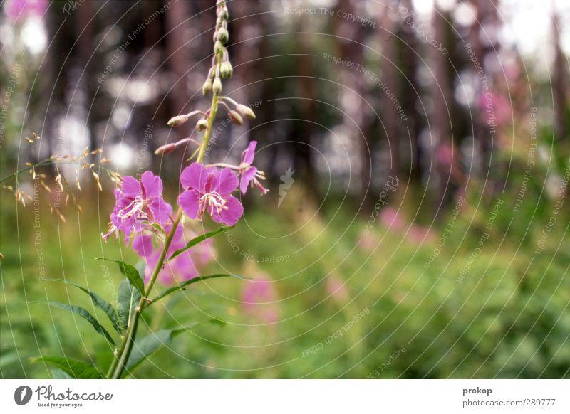 Frühlingsgefühle Umwelt Natur Landschaft Pflanze Schönes Wetter Baum Blume Gras Sträucher Blüte Wildpflanze Wiese Wald exotisch natürlich schön Lebensfreude