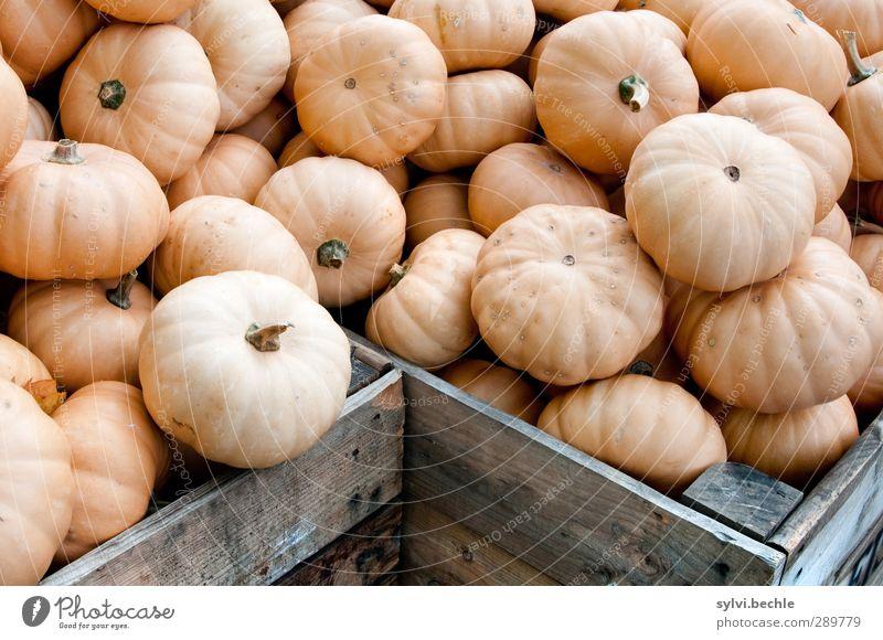 Überfluss | Nicht nur an Weihnachten ... Holz grau Gesundheit Gesunde Ernährung orange Lebensmittel Ernährung viele Gemüse lecker Rost Reichtum Kasten Bioprodukte Diät Mittagessen