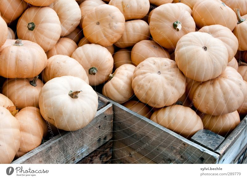 Überfluss | Nicht nur an Weihnachten ... Lebensmittel Gemüse Ernährung Mittagessen Bioprodukte Vegetarische Ernährung Diät Gesundheit Gesunde Ernährung