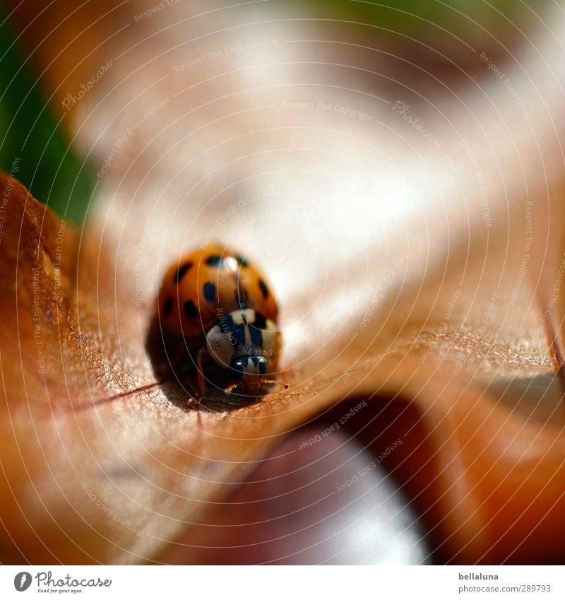 Überfluss | So viele Marienkäfer braucht keine Datenbank Natur grün Pflanze rot Tier Blatt schwarz Wald Wiese Herbst Gras Garten braun Park orange Feld