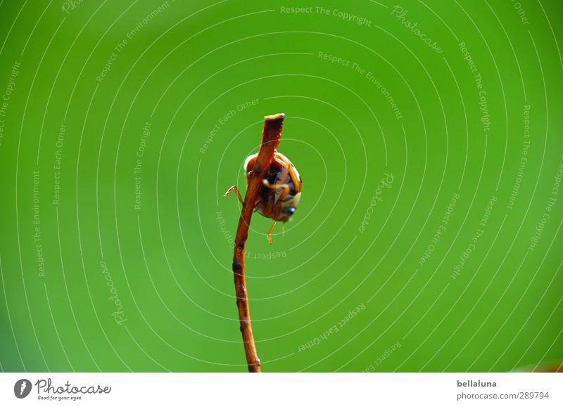 Überfluss | Die Wahl an Möglichkeiten - rauf oder runter Natur grün Pflanze rot Tier Blatt schwarz Wald Umwelt Wiese Herbst Gras Garten braun Park orange