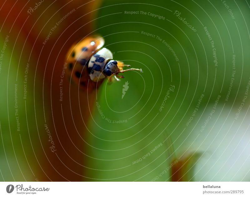Überfluss | Noch ein Käfer!!! Umwelt Natur Pflanze Tier Herbst Schönes Wetter Gras Blatt Wildpflanze Garten Park Wiese Feld Wald Wildtier Tiergesicht Flügel 1