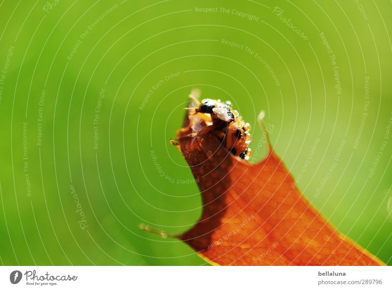 Überfluss | Zu allem Überfluss hat's noch geregnet! Umwelt Natur Pflanze Tier Wasser Wassertropfen Sonnenlicht Herbst Schönes Wetter Gras Blatt Wildpflanze