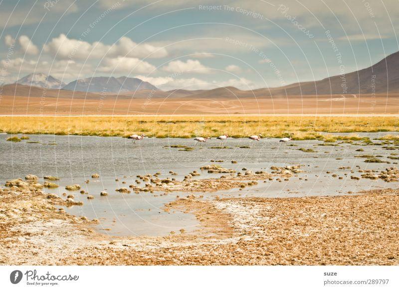 Überfluss | irgendwo in Chile Himmel Natur Wasser schön Sommer Tier Wolken Landschaft Umwelt Ferne Wärme Berge u. Gebirge See Horizont außergewöhnlich Erde