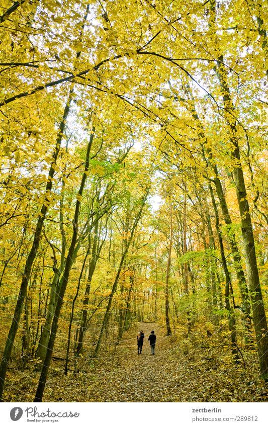 Herbstspaziergang Mensch Blatt Wald Herbst Berlin Paar paarweise Spaziergang Fußweg Herbstlaub Spazierweg November Oktober Brandenburg Blätterdach Laubwald