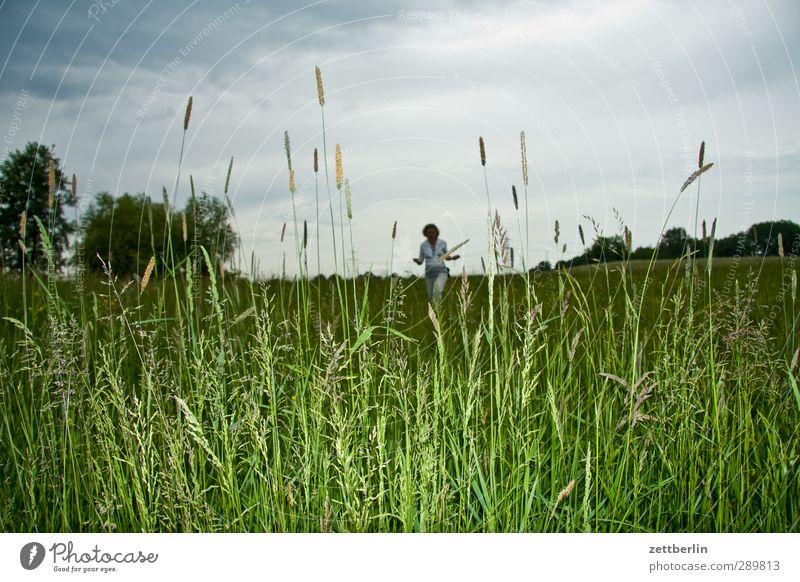 Wiese Natur Feld Ausflug Detailaufnahme Gewitter Gras Himmel Horizont Kornblume Mohn Regen Sommer Tiefdruckgebiet Wald Wolken Wolkendecke Mensch Frau