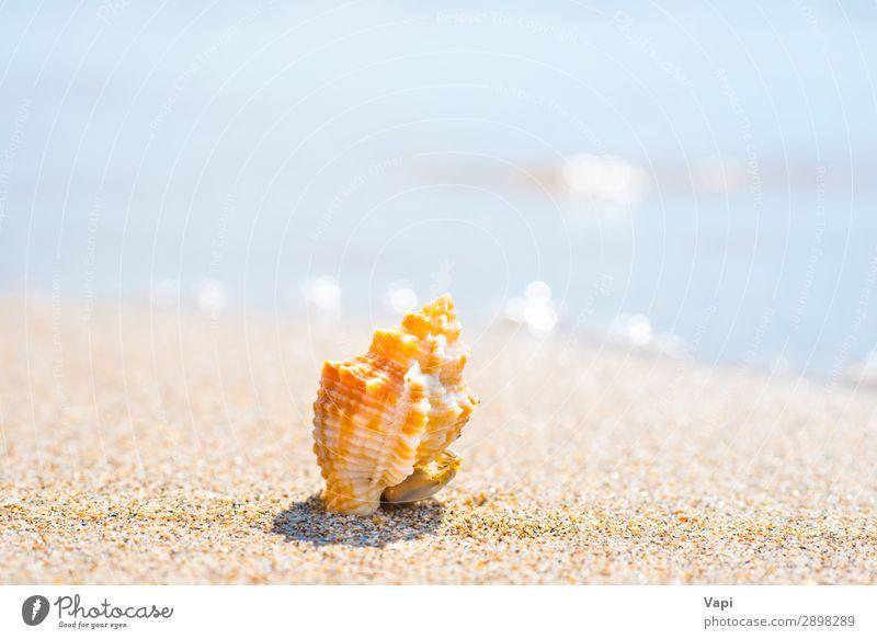 Himmel Ferien & Urlaub & Reisen Natur Sommer blau schön Wasser weiß Landschaft rot Sonne Meer Erholung Tier Strand Lifestyle