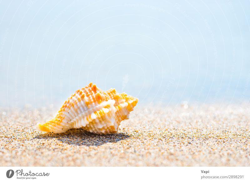 Himmel Ferien & Urlaub & Reisen Natur Sommer blau schön Wasser weiß Landschaft rot Meer Erholung Tier Strand gelb Umwelt