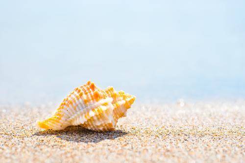 Makroaufnahme der Muschel am Sandstrand schön Erholung Spa Freizeit & Hobby Ferien & Urlaub & Reisen Tourismus Ausflug Abenteuer Sommer Sommerurlaub Strand Meer