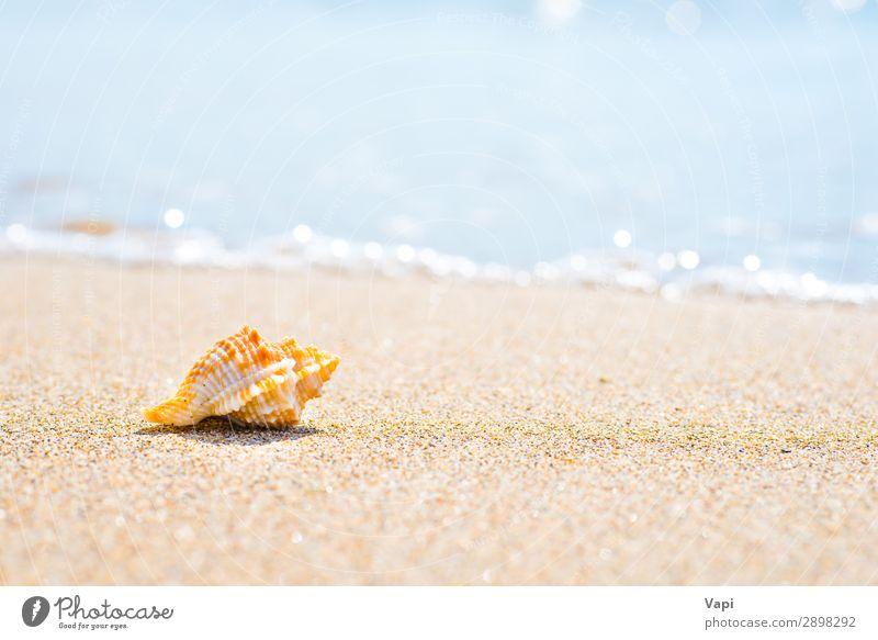 Ferien & Urlaub & Reisen Natur Sommer blau schön Wasser weiß Landschaft Meer Erholung Tier Strand gelb Umwelt natürlich Küste