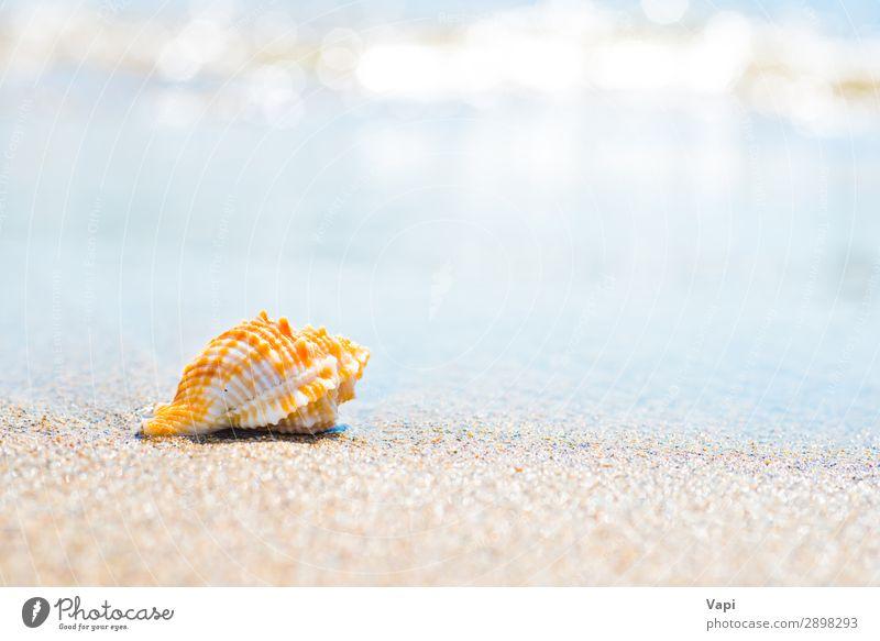 Ferien & Urlaub & Reisen Natur Sommer blau schön Wasser weiß Landschaft Sonne Meer Erholung Tier Strand gelb Umwelt natürlich