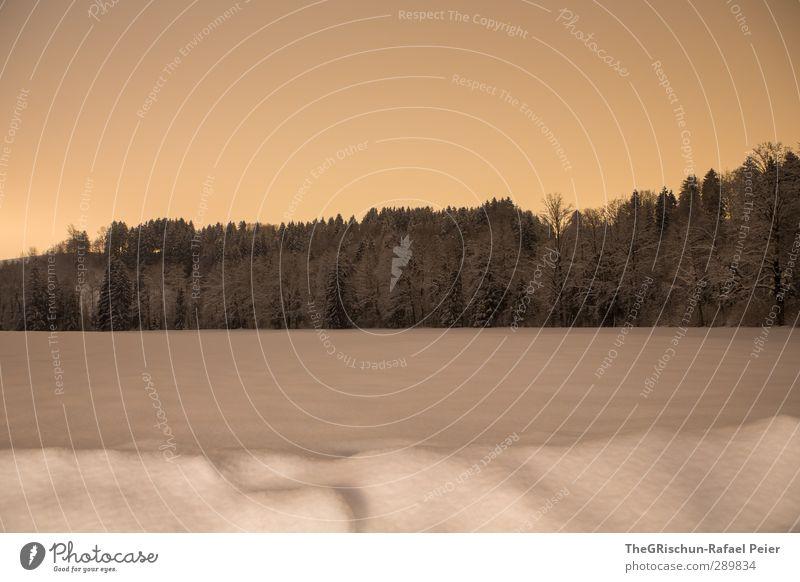 winterstimmung Natur Himmel (Jenseits) weiß Baum Landschaft ruhig Wald schwarz kalt Schnee Stimmung Schneefall Orange Romantik deutlich friedlich