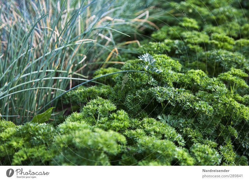 Grün Lebensmittel Gemüse Salat Salatbeilage Kräuter & Gewürze Ernährung Bioprodukte Vegetarische Ernährung Diät Fasten Natur Pflanze Nutzpflanze Garten Wachstum