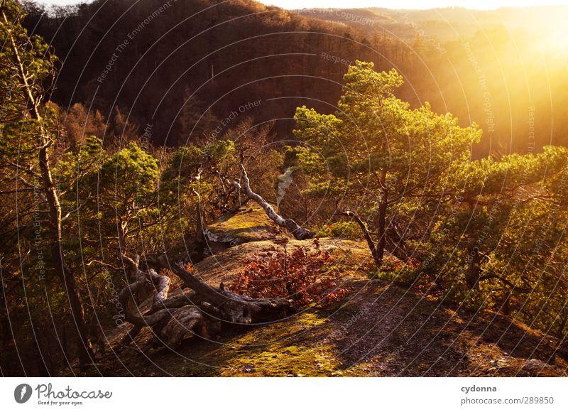 Sonnenplätzchen Natur Baum Erholung Landschaft ruhig Ferne Wald Berge u. Gebirge Umwelt Wärme Leben Herbst Freiheit Felsen träumen Tourismus