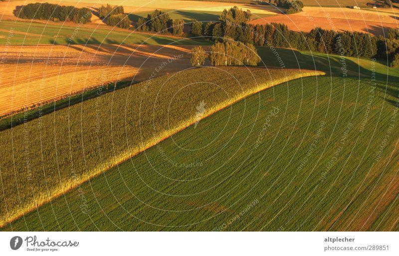 Draufsicht Natur Landschaft Erde Sommer Schönes Wetter Baum Sträucher Feld fahren braun gelb grün Freizeit & Hobby Perspektive Schattenspiel Ballonfahrt
