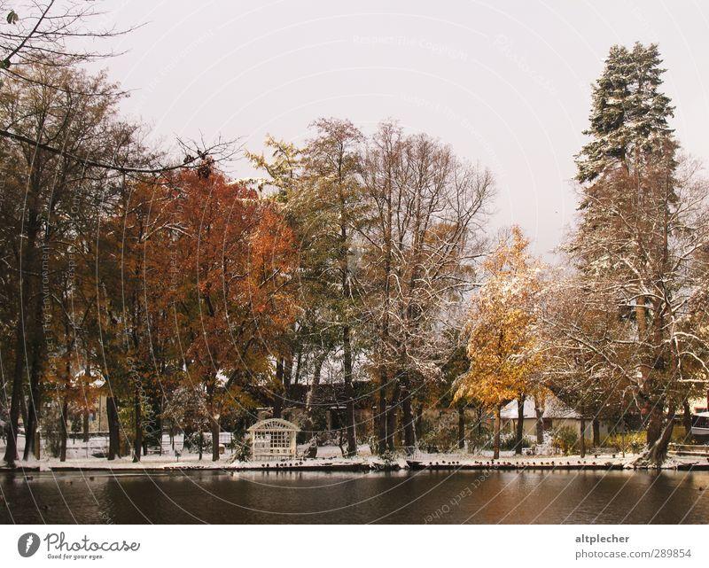 Erster Schnee Natur Pflanze Wasser Herbst schlechtes Wetter Baum Teich Kleinstadt Wildtier Vogel Tiergruppe kalt braun gelb grau orange schwarz ruhig ästhetisch
