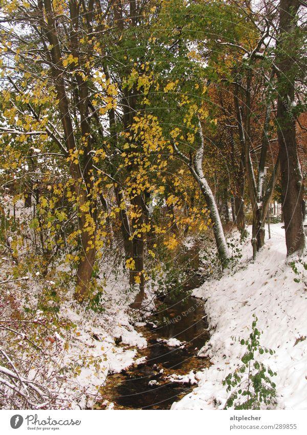 Schnee im Herbst Natur grün weiß Pflanze Baum Blatt gelb kalt grau braun Wetter Bach Laubbaum