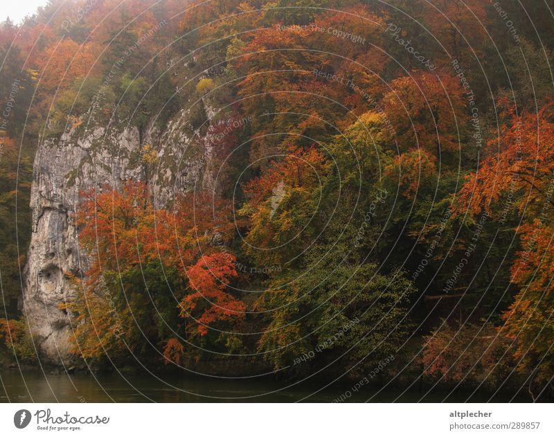 Herbstliches Farbenspiel Natur Tier Nebel Baum Blatt Felsen Flussufer Donau mehrfarbig Herbstlaub Laubwald prächtig Farbfoto Außenaufnahme Menschenleer Tag