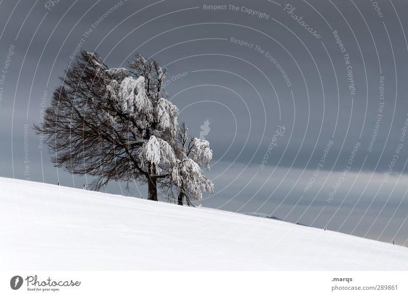 Halbwegs Ausflug Winter Schnee Winterurlaub Umwelt Natur Landschaft Himmel Gewitterwolken Klima Klimawandel Wetter schlechtes Wetter Unwetter Eis Frost Baum