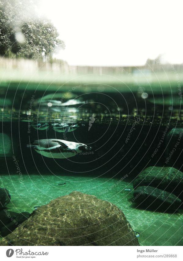 Underwater blau grün Freude Tier Bewegung Schwimmen & Baden Horizont Freizeit & Hobby nass einzigartig tauchen entdecken türkis Zoo Partnerschaft