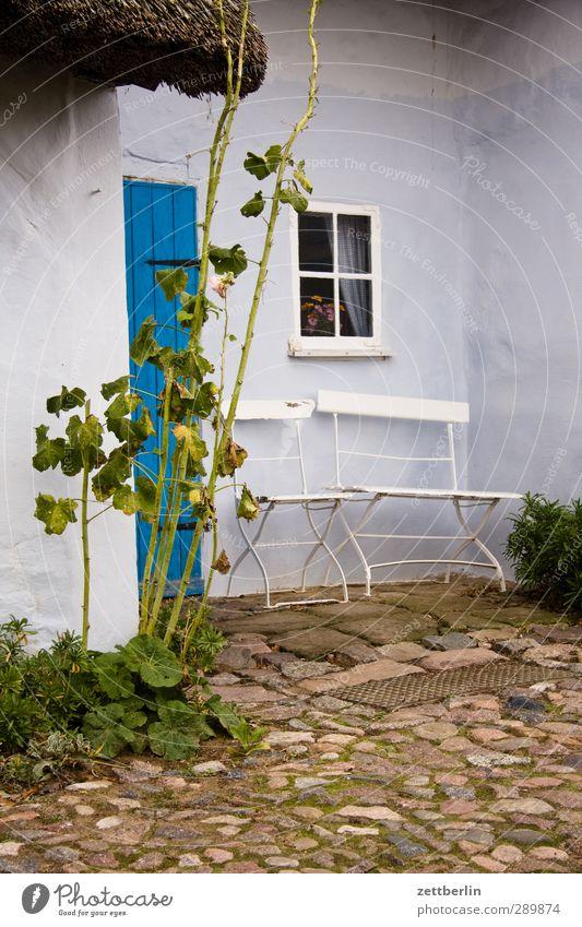 Pfarrwitwenhaus Natur alt Sommer Pflanze Blume Blatt Haus Umwelt Fenster Wand Mauer Garten Tür Schönes Wetter Rose Stuhl
