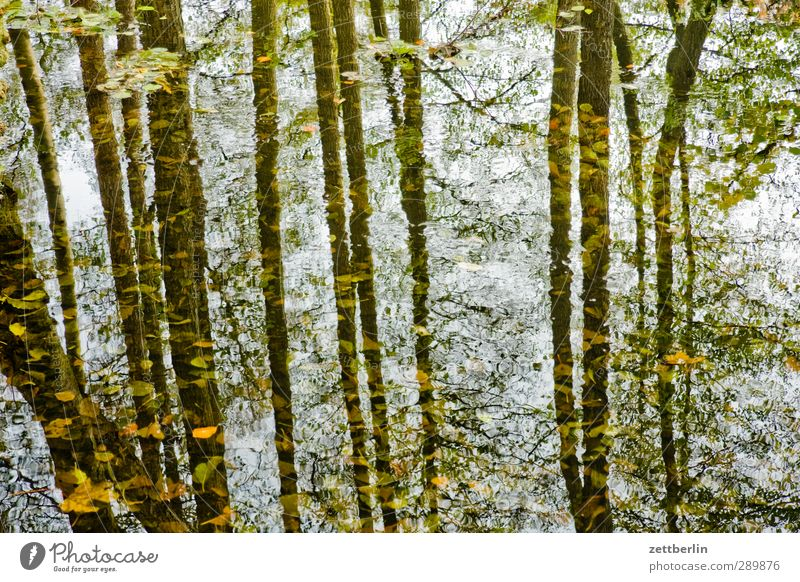 Wald Umwelt Natur Landschaft Urelemente Erde Wasser Sommer Herbst Klima Klimawandel Wetter Schönes Wetter Pflanze Baum Blatt Grünpflanze Wildpflanze gut schön