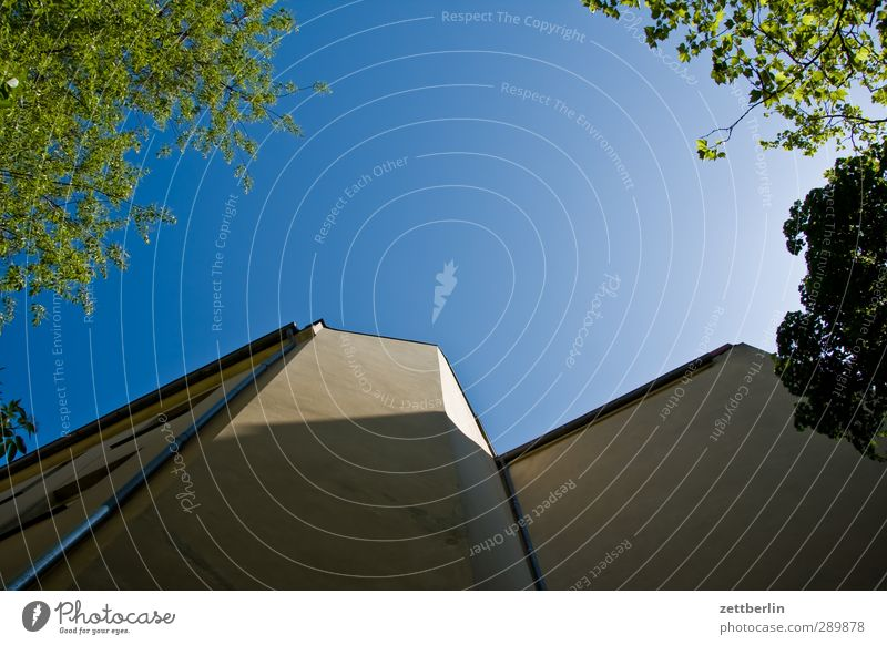 Nachzügler Himmel Natur schön Sommer Baum Blatt Haus Umwelt Wand Architektur Gebäude Mauer Fassade Hochhaus Klima Schönes Wetter