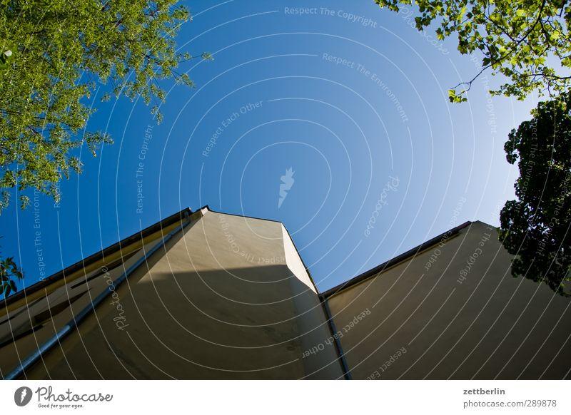 Nachzügler Umwelt Natur Himmel Wolkenloser Himmel Sommer Klima Schönes Wetter Baum Blatt Stadtzentrum Haus Hochhaus Bauwerk Gebäude Architektur Mauer Wand