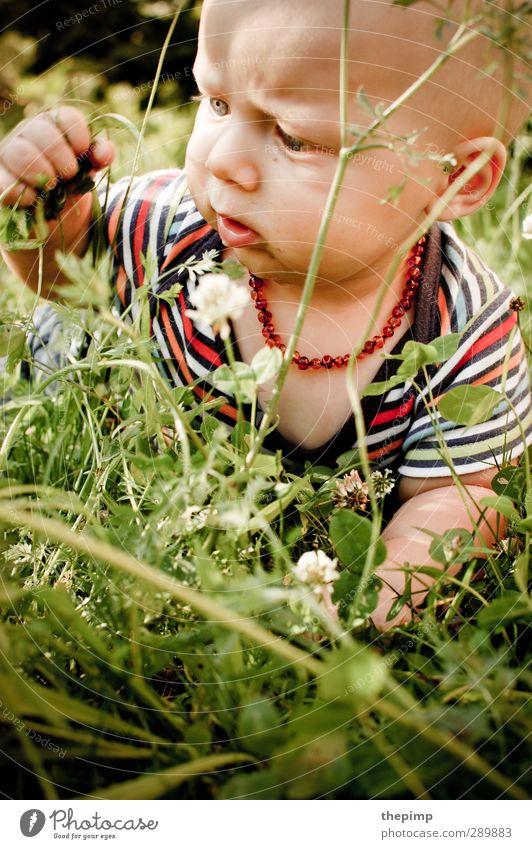 Tiefer Dschungel Mensch Natur Sommer Freude Umwelt Wiese Gras Junge klein Kopf Kindheit maskulin Erde Baby lernen niedlich