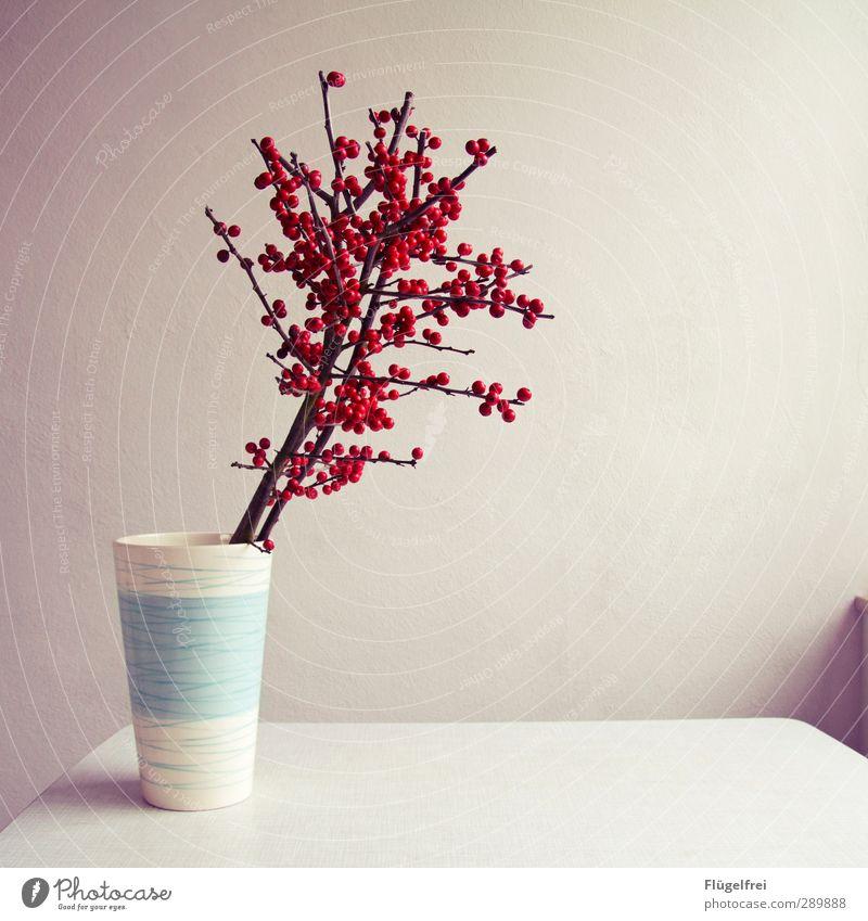 Für Omas Grab Pflanze Blühend Dekoration & Verzierung Tisch hell rot weiß Vogelbeeren Vase leer Wand Ast Fensterbrett Licht Farbfoto Innenaufnahme