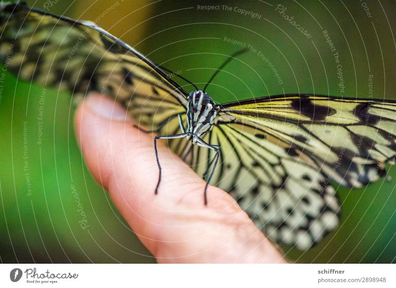 Hautsache | Handschmeichler Finger Tier Wildtier Schmetterling 1 fliegen sitzen außergewöhnlich nah Nahaufnahme berühren Landeplatz flattern Zeigefinger sanft