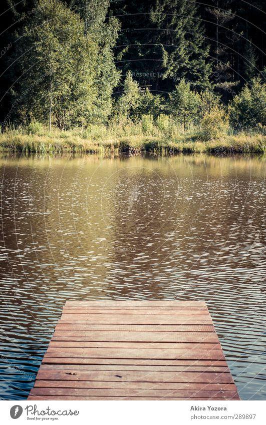 Zur anderen Seite Natur Landschaft Wasser Sommer Baum Gras Sträucher Seeufer blau braun gelb grün selbstbewußt Steg Farbfoto Menschenleer Textfreiraum links