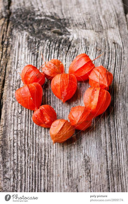 Physalis in Herzform Umwelt Natur Frühling Sommer Herbst Pflanze Wildpflanze Holz Zeichen Gefühle Glück Fröhlichkeit Zusammensein Liebe Verliebtheit Treue