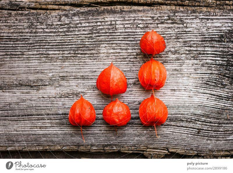 rote Physalis in Diagramform auf grauem Holz Natur Sommer Pflanze Landschaft Hintergrundbild Herbst Umwelt Frühling Business Wachstum Beginn Zukunft einzigartig