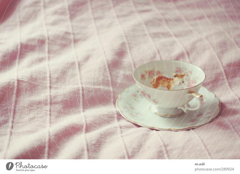 kitz in a cup Wald rosa Wildtier Kitsch Spielzeug Porzellan mädchenhaft Rehkitz Teetasse