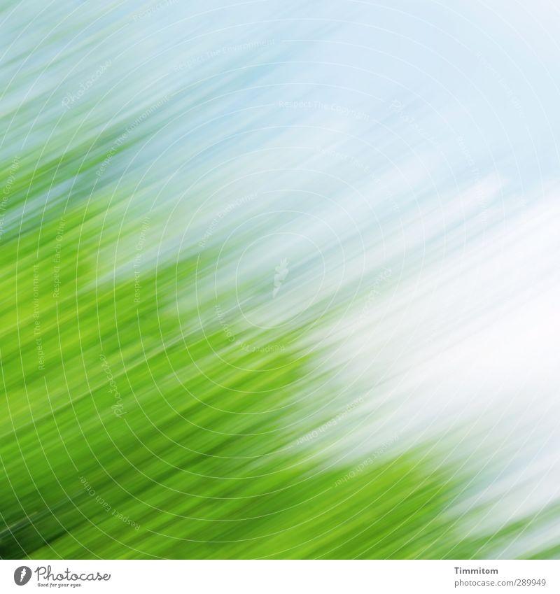 Trash!| It Wasn't Me Himmel blau grün weiß Baum Freude Wolken Gefühle Fröhlichkeit ästhetisch einfach
