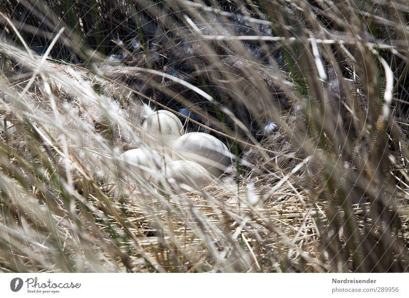 Trash!  Eier haben... Natur Pflanze Tier Frühling Gras beobachten kuschlig trocken Wärme weich Beginn entdecken Perspektive Nest Nestwärme Horst Brutpflege